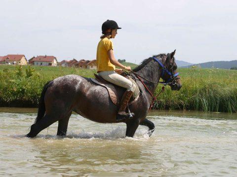 Promenade à cheval dans les paysages jurassiens
