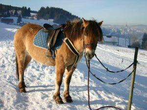Nos chevaux et poneys