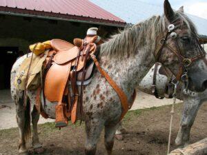 Cheval équipé d'une selle Western