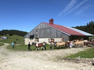 Promenade équestre | Ferme Equestre Les Bâties (Mouthe)